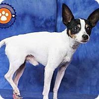 Adopt A Pet :: Triumph - South Bend, IN