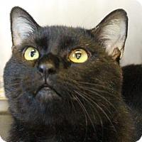 Adopt A Pet :: Speck - Waynesboro, PA