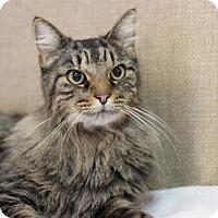 Adopt A Pet :: Miles - Midland, MI