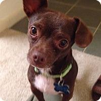 Adopt A Pet :: Taco - Houston, TX