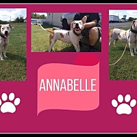 American Pit Bull Terrier/American Staffordshire Terrier Mix Dog for adoption in Covington, Tennessee - Annabelle