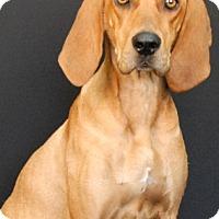 Adopt A Pet :: Lady Luck - Newland, NC