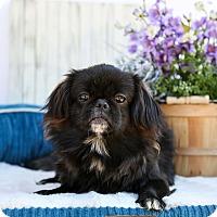 Adopt A Pet :: Princess - Auburn, CA