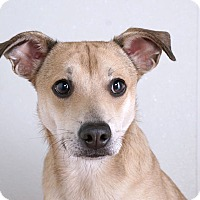 Adopt A Pet :: Roger Rabbit - Sudbury, MA