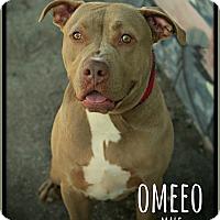 Adopt A Pet :: Omeeo - Fallbrook, CA