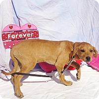 Adopt A Pet :: Jothame - West Chicago, IL