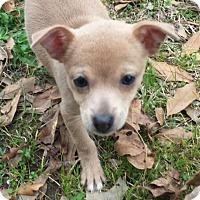 Adopt A Pet :: Brandy in Texarkana, TX - Texarkana, TX