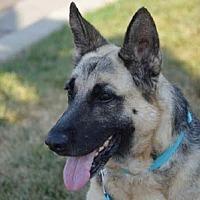 Adopt A Pet :: Duchess - Mira Loma, CA