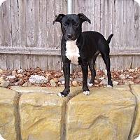Adopt A Pet :: JeWels - LAKEVILLE, MA