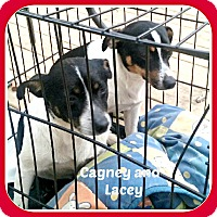 Adopt A Pet :: CAGNEY & LACEY - Malvern, AR