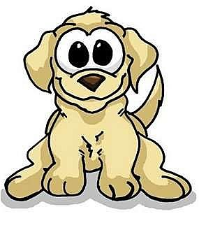 Labradoodle/Poodle (Standard) Mix Dog for adoption in New Jersey, New Jersey - NJ Foster Homes Needed