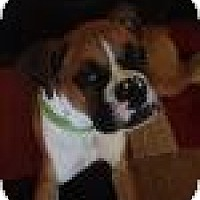 Adopt A Pet :: Paco Taco - Springfield, MO