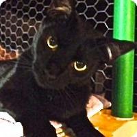 Adopt A Pet :: Oliver - Hyde Park, NY
