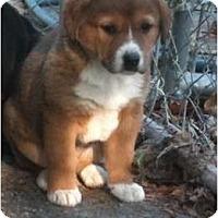 Adopt A Pet :: Jessie aka Trixie - Toronto/Etobicoke/GTA, ON