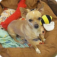 Adopt A Pet :: Bryan - Wickenburg, AZ