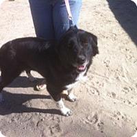 Adopt A Pet :: Tawny - Phelan, CA