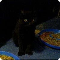 Adopt A Pet :: Taylor - Portland, ME