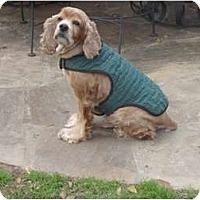 Adopt A Pet :: Elliott - Sugarland, TX
