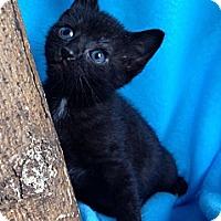 Adopt A Pet :: Star - Union, KY