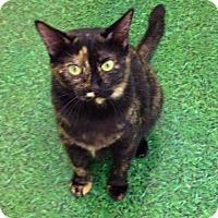 Adopt A Pet :: Chessie - Garland, TX