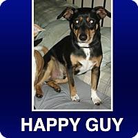 Adopt A Pet :: Duke - Morrisville, PA