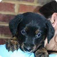 Adopt A Pet :: Martha - Foster, RI
