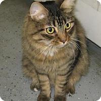 Adopt A Pet :: CHEETO II - Phoenix, AZ