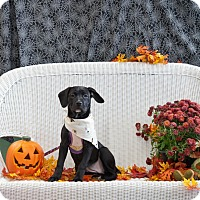 Adopt A Pet :: EmmyLou ~ Adoption Pending - Youngstown, OH