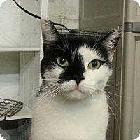 Adopt A Pet :: Sabrina - Trevose, PA