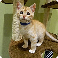 Adopt A Pet :: Mercury - The Colony, TX