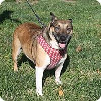 Adopt A Pet :: Inca - West Des Moines, IA