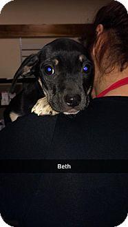 Labrador Retriever Mix Puppy for adoption in Willows, California - Beth