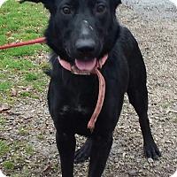 Adopt A Pet :: Desiree - Paris, IL