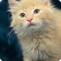 Adopt A Pet :: Buffie161889 - Atlanta, GA
