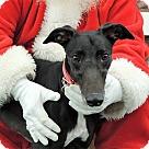 Adopt A Pet :: Lovie