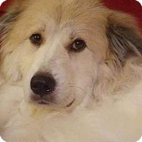 Adopt A Pet :: Josephine - Hedgesville, WV