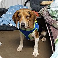 Adopt A Pet :: Blake - Pottsville, PA