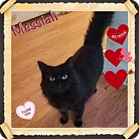 Adopt A Pet :: Messiah - Harrisburg, NC