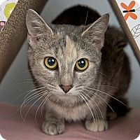 Adopt A Pet :: Toffee Bar Crunch - Wilmington, DE