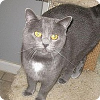 Adopt A Pet :: Help support our FeLV Kitties - Fayetteville, GA