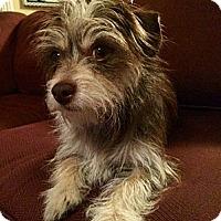Adopt A Pet :: Latte - La Habra Heights, CA