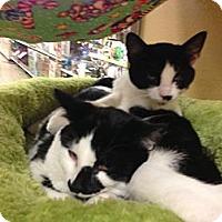 Adopt A Pet :: Houdini - Monroe, GA