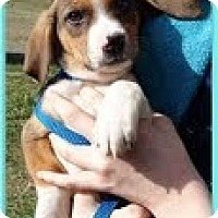 Adopt A Pet :: squiggles - Staunton, VA