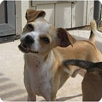Adopt A Pet :: Butter - Golden Valley, AZ