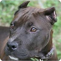 Adopt A Pet :: Madde - DFW, TX