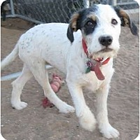 Adopt A Pet :: Missy - Golden Valley, AZ