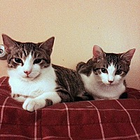 Adopt A Pet :: Blueberry and Peaches - New York, NY