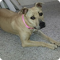 Adopt A Pet :: *DEGA* - Winder, GA