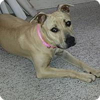 Adopt A Pet :: *DEGA* - Winder, GA