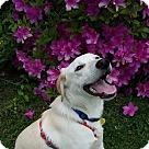 Adopt A Pet :: Jammin